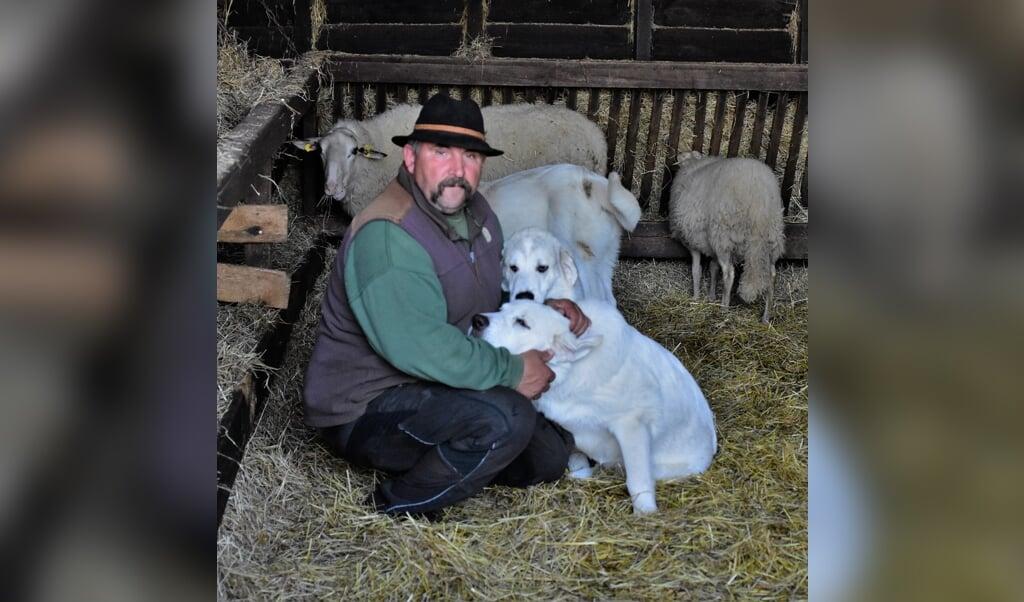Schaapherder André Kühn laat zijn duizend schapen bewaken door imposante honden.  (beeld Theo Haerkens)