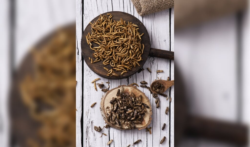 high angle shot of a pile of fried worms seasoned with garlic and herbs, and a pile of fried crickets seasoned with onion and barbecue sauce, in wooden trays, on a rustic white wooden table  (beeld Getty Images/iStockphoto)
