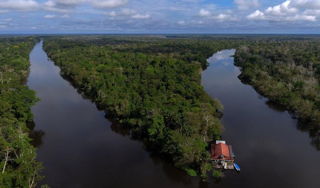 De Amazone in Brazilië.  (beeld afp)