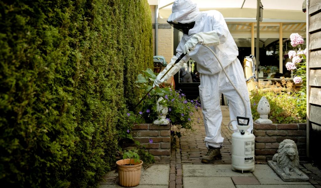 Ongediertebestrijder Wilfred Top verwijdert een wespennest in Barneveld.  (beeld anp / Sander Koning)