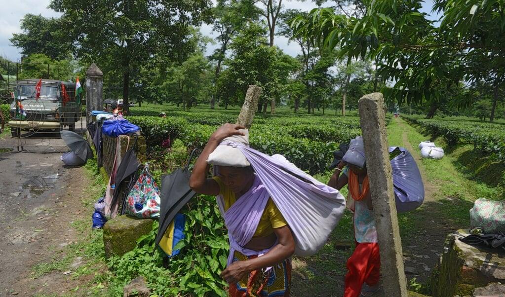Een theeplantage in India. 114 bisschoppen uit 33 landen vragen aandacht voor de erbarmelijke omstandigheden waarin miljoenen mensen moeten werken. De coronacrisis treft hen extra hard.  (beeld afp / Diptendu Dutta)