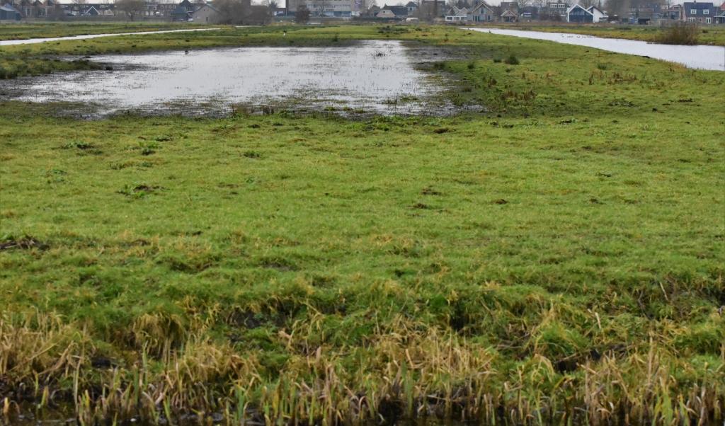 Het helpt weidevogels als boeren aan agrarisch natuurbeheer doen en de greppels op hun land vol water laten staan of de lagergelegen percelen tijdelijk inrichten als plasdrasgebied.  (beeld Theo Haerkens                       )