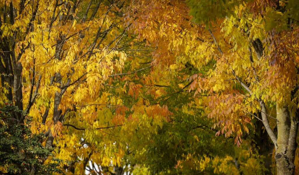 Herfstkleuren in Bunnik  (beeld anp)