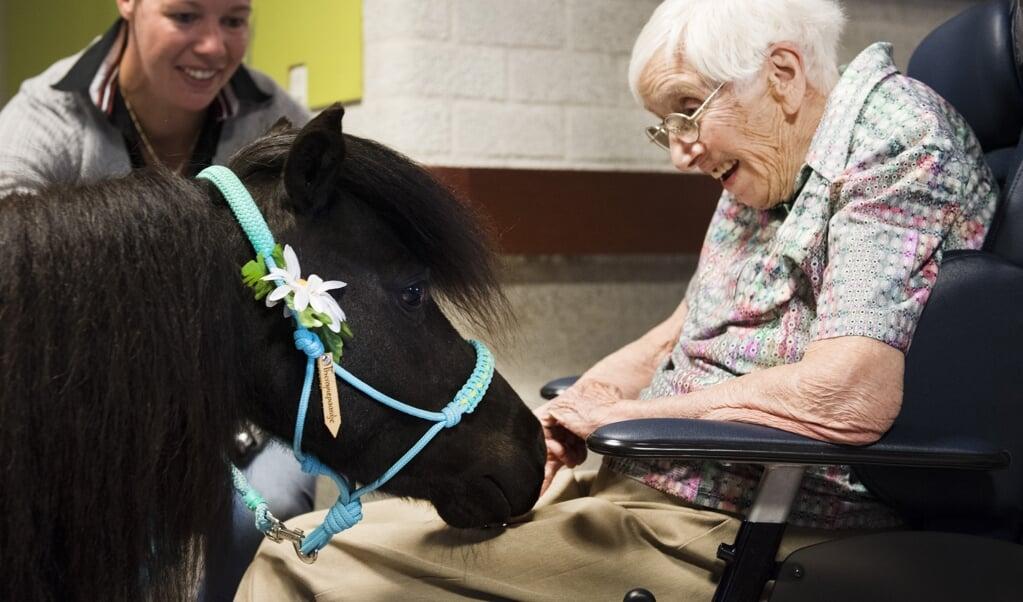 Archieffoto vanuit woonzorg- en revalidatiecentrum PW Janssen te Deventer: een therapiesessie waarbij een pony dementerende ouderen helpt in contact te komen met de buitenwereld.  (beeld anp / Piroschka van de Wouw)