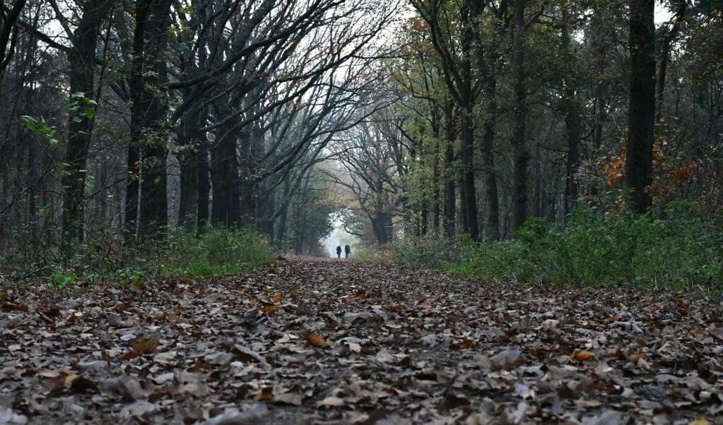Wandelaars in de Maashorst bij Uden. Wie het goed uitkient kan best nog een rustig wandelgebied vinden.   (beeld Theo Haerkens)