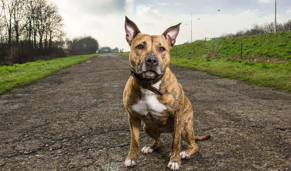 De ecologische pootafdruk van een hond is 0,9 tot 3,66 hectare per jaar.  (beeld Gabry Zijlstra)