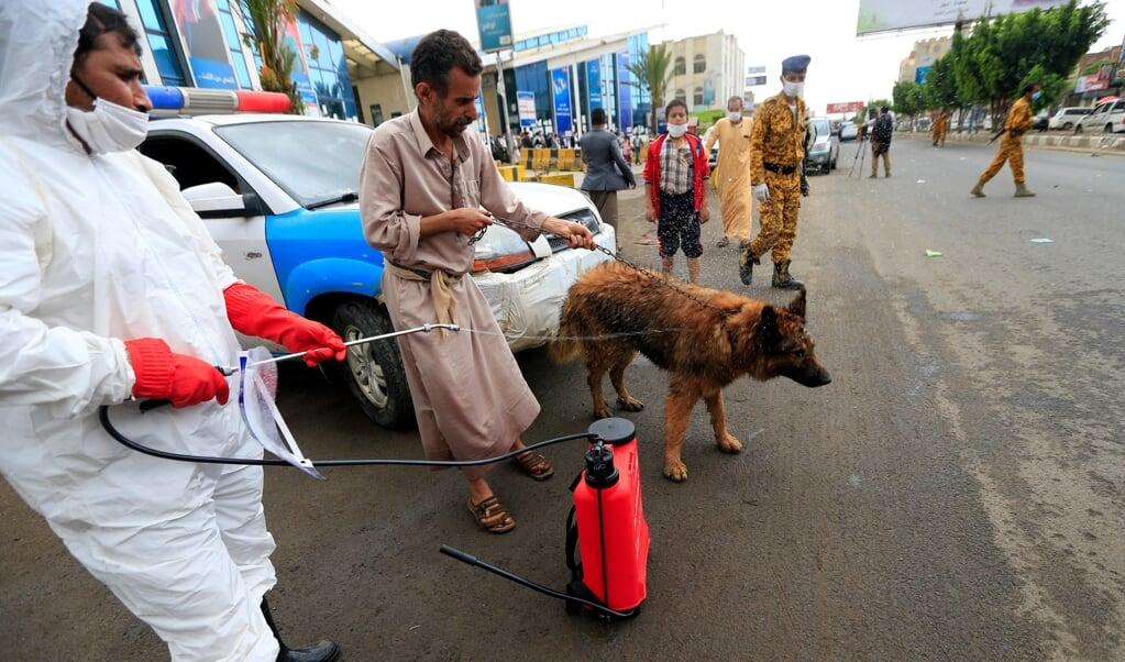 Helemaal ontkend wordt corona niet. In Sanaa wordt op straat een hond ontsmet.   (beeld afp / Mohammed Huwais)