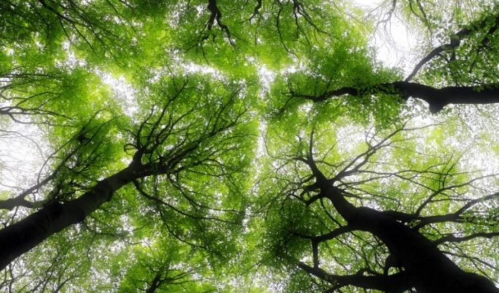 Onderzoek laat zien dat bossen steeds jonger worden.   (beeld )