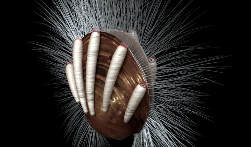 Reconstructie van een schelpdier met parasieten (de witte kokertjes).  (beeld )