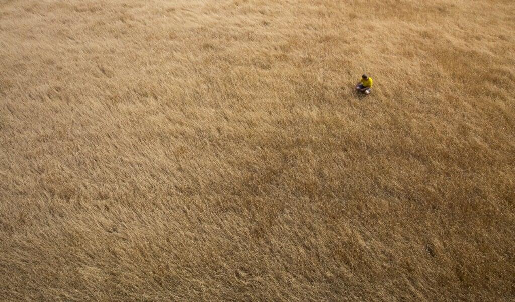 Akkerbouwer Martijn Vorkink bekijkt perceel met verdroogd gras. De landbouw heeft door een neerslagtekort te kampen met droogte.  (beeld anp / Vincent Jannink)