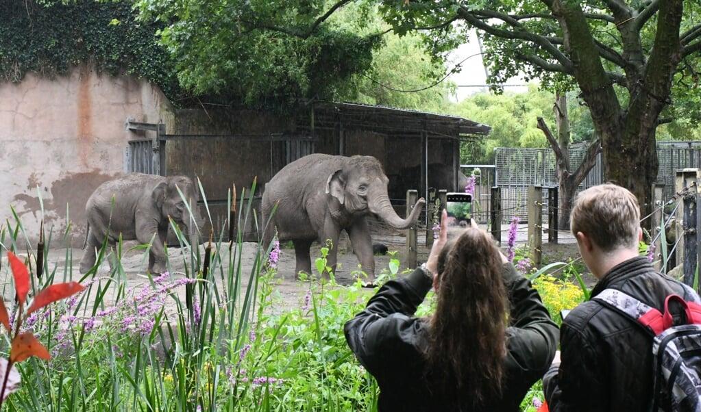 Bezoekers bij de olifanten in Blijdorp.  (beeld Theo Haerkens)