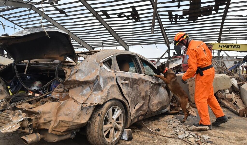 Het Nederlandse reddingsteam in Beiroet kan effectief naar slachtoffers zoeken met waardevolle speurhonden. Maar de reddingswerkers krijgen slechts een beperkt zoekgebied toegewezen door de Libanese autoriteiten. 'We staan te popelen. Maar ja, ook dit hoort erbij.'  (beeld anp / Fadel Itani)