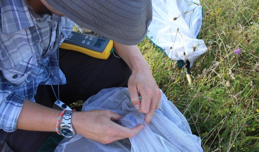 Een onderzoeker meet de lichaamstemperatuur van een vlinder.  (beeld universiteit van cambridge)