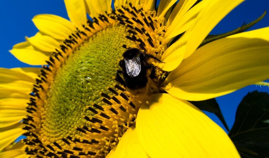 Insecten liggen wakker van bestrijdingsmiddelen.  (beeld anp / Koen Suyk)