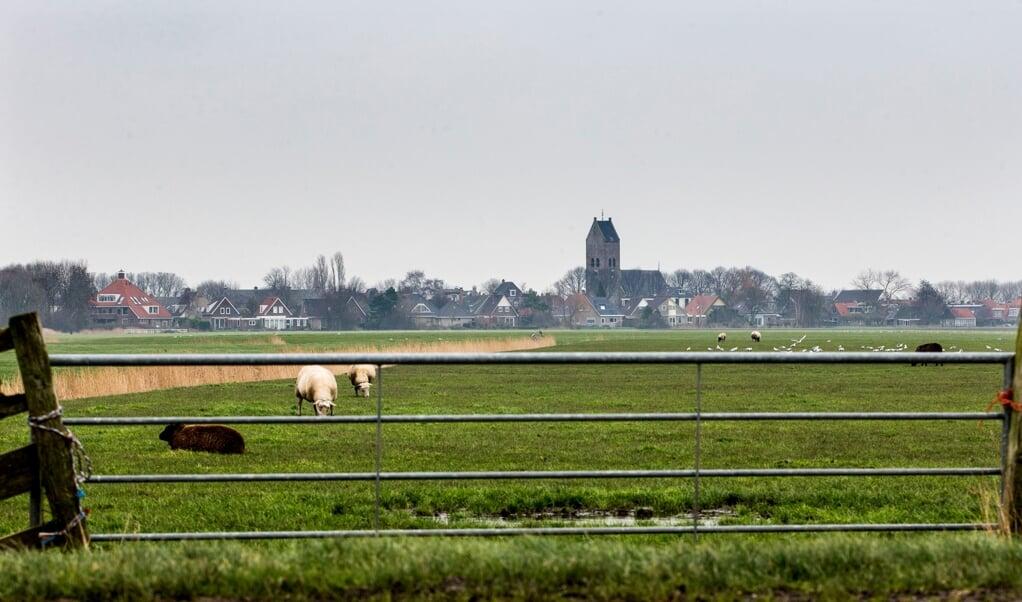 Schapen in een weiland in Fryslân. Als een dwalende wolf wordt gesignaleerd, kunnen speciale wolvennetten om de deel van de wei worden gezet, totdat de wolf is verdreven.  (beeld anp / Vincent Jannink)