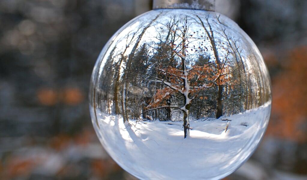 bolfotografie, veluwe, sneeuw, winter  (beeld Pim Edelman)