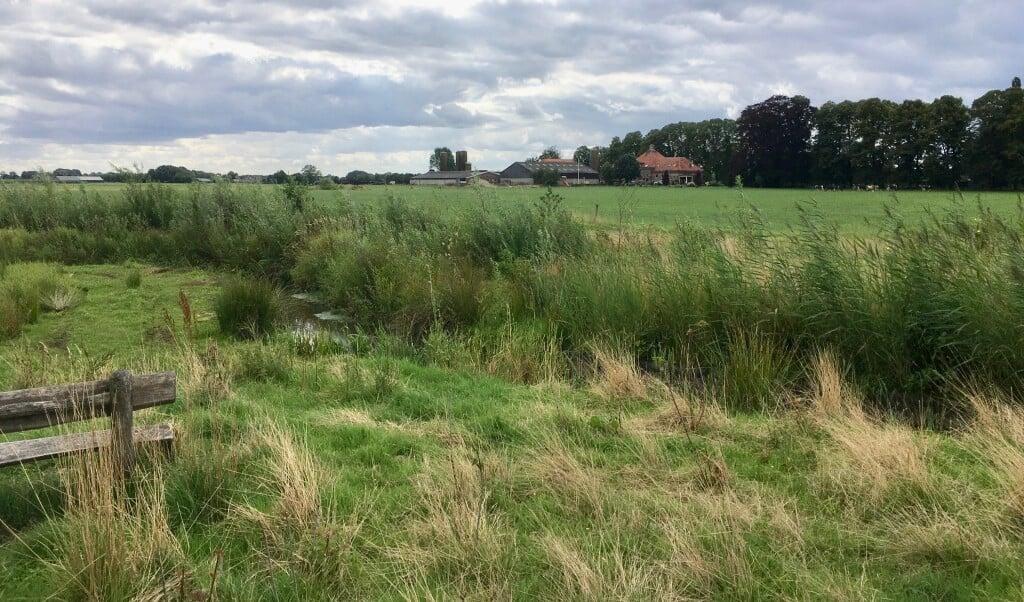 Modderbeek nabij Achterveld.  (beeld Klaas Vos)