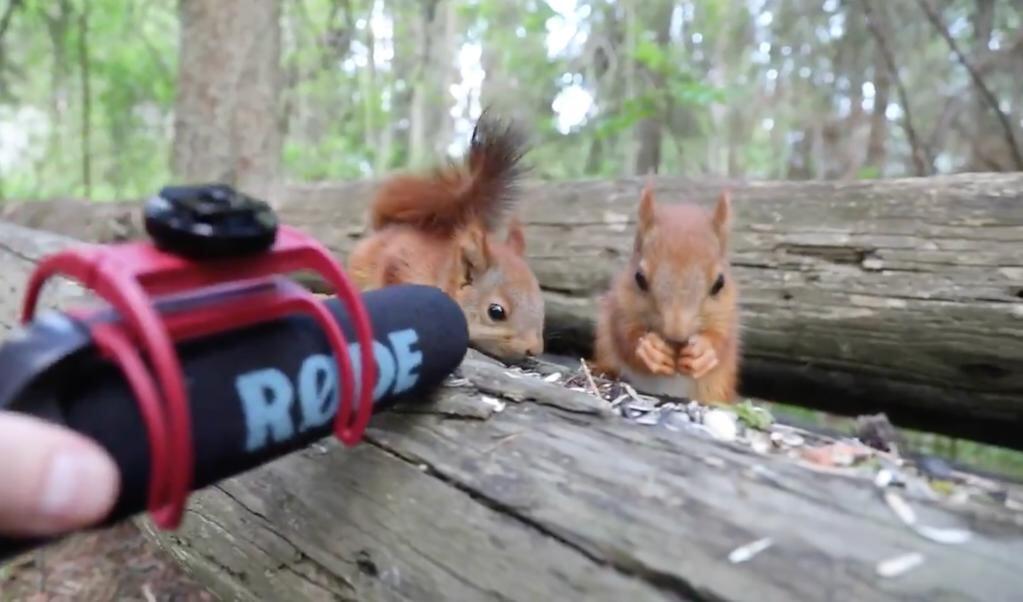 In een korte film volgt Dani Connor twee knabbelende eekhoorns in Zweden.  (beeld Dani Connor)