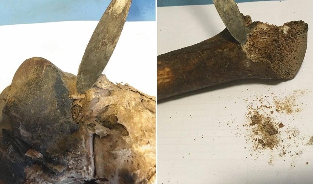De vermeende voet van Filippus (links) en het vermeende dijbeen van Jakobus (rechts).  (beeld heritage science)
