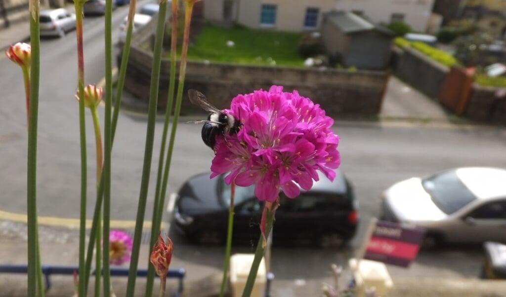 Stadstuinen leveren veel brandstof voor bijen.  (beeld Nicolas Tew)