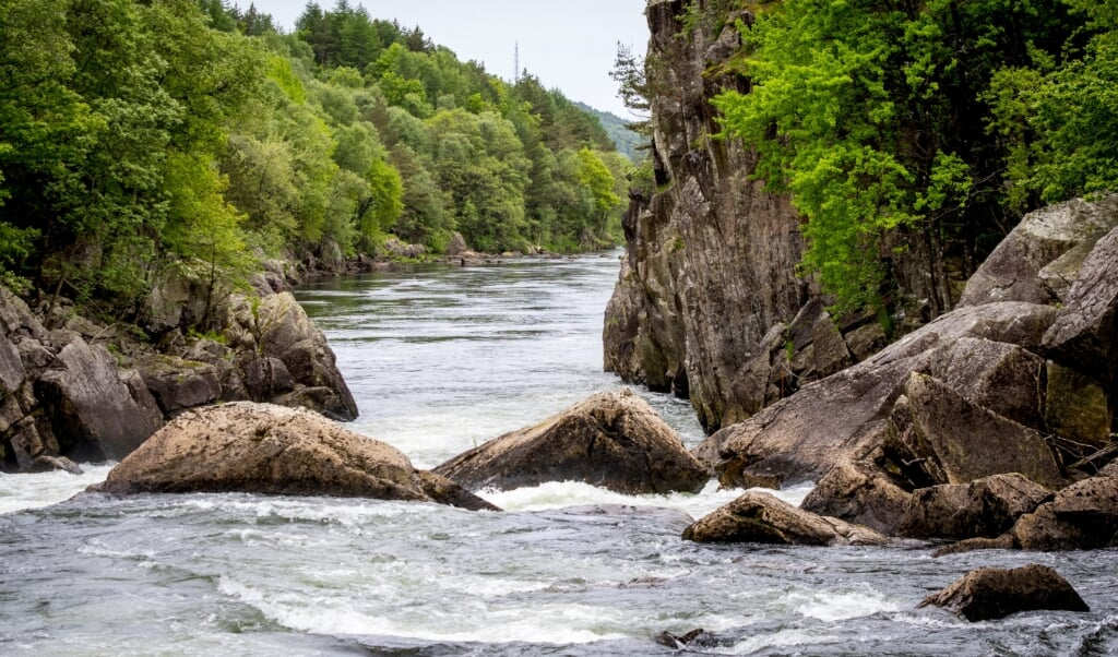 Vooral in Scandinavië hebben bossen last van insectenplagen.  (beeld  anp / Lex van Lieshout)