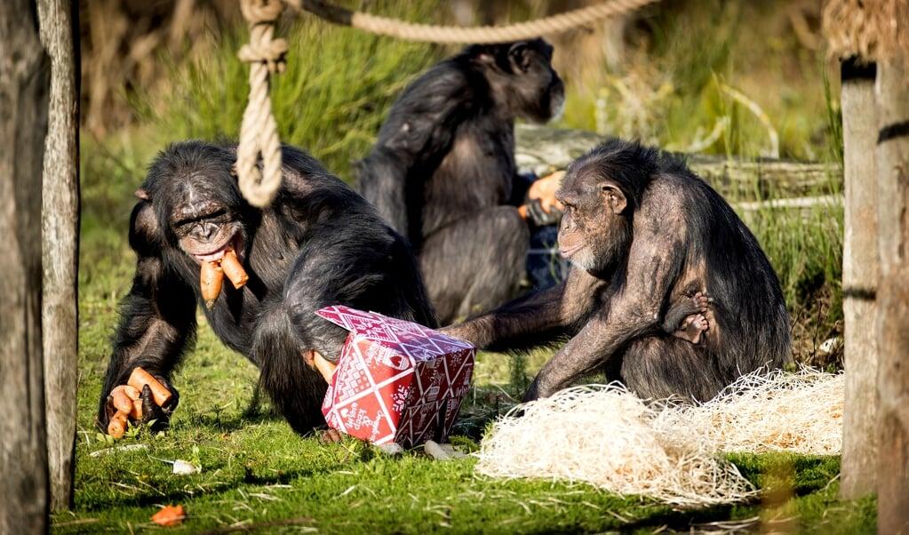 Onderzoek van Frans de Waal naar het gedrag van apen laat zien dat ook in het dierenrijk soms sprake is van empathie en wederkerigheid.  (beeld anp / Koen van Weel)
