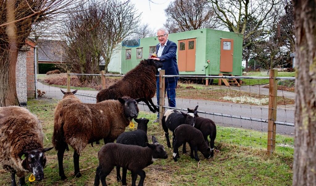 Adrie geeft graag de schapen die tegenover zijn atelier grazen een stuk brood.  (beeld Dirk Hol)