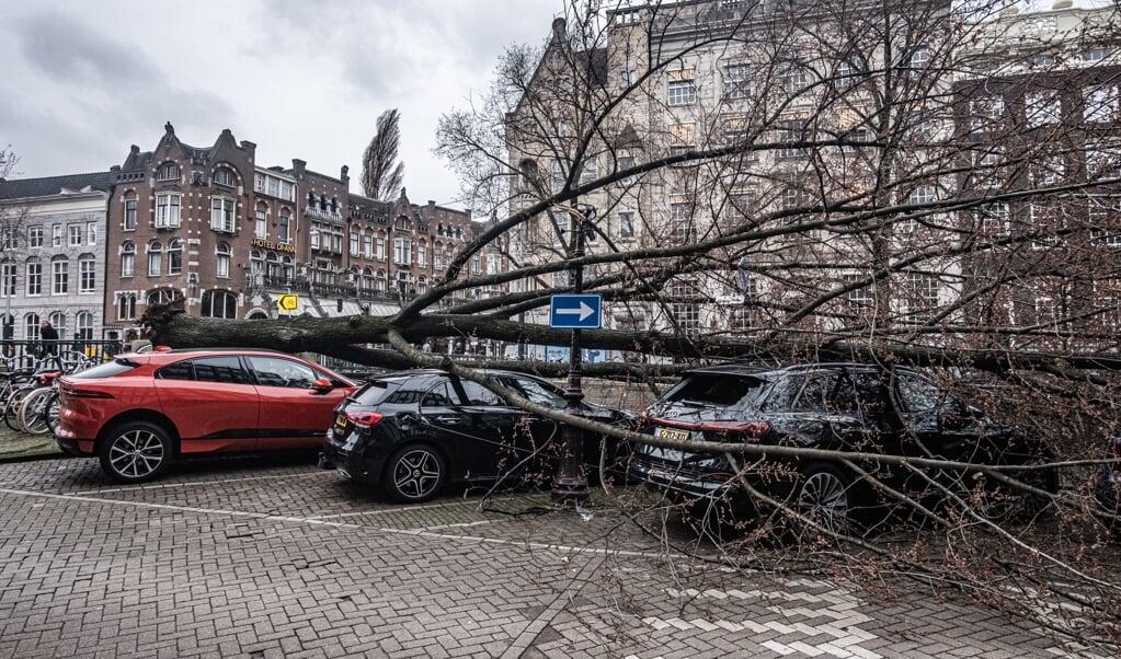 Een grote boom is boven op een aantal geparkeerde auto's gevallen tijdens de eerste storm van 2021.    (beeld anp / Joris van Gennip)