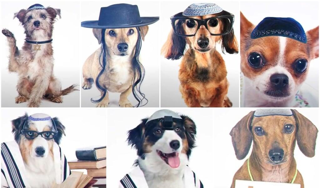 Honden met een keppeltje of gebedssjalen - de partij UTJ vergelijkt ze met niet-orthodox bekeerde Joden.  (beeld utj)