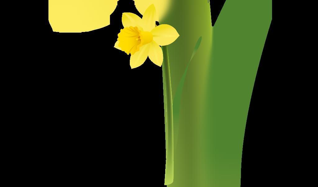 Narcis  (beeld cliparts)