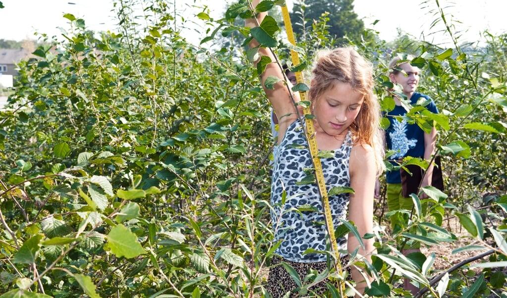 Een tiny forest wil kinderen meer bij de natuur betrekken.  (beeld Jessica de Lepper)