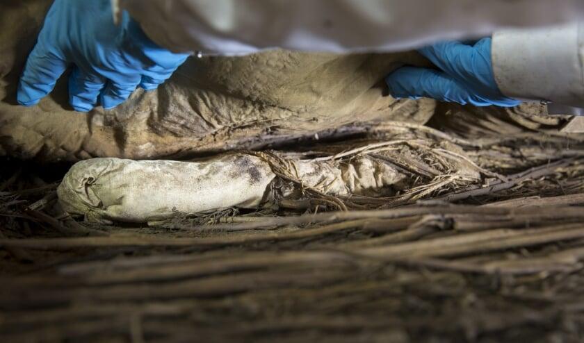 Resten van foetus kleinzoon in Deens-Zweeds bisschopsgraf