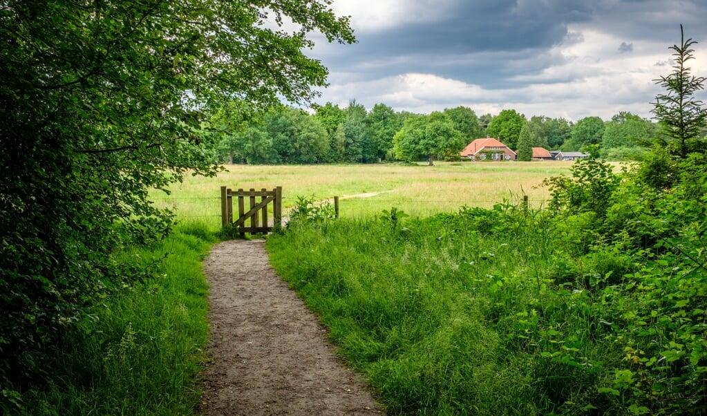 Er zijn vele landweggetjes die er voor een wandelaar interessant uitzien.  (beeld istock)