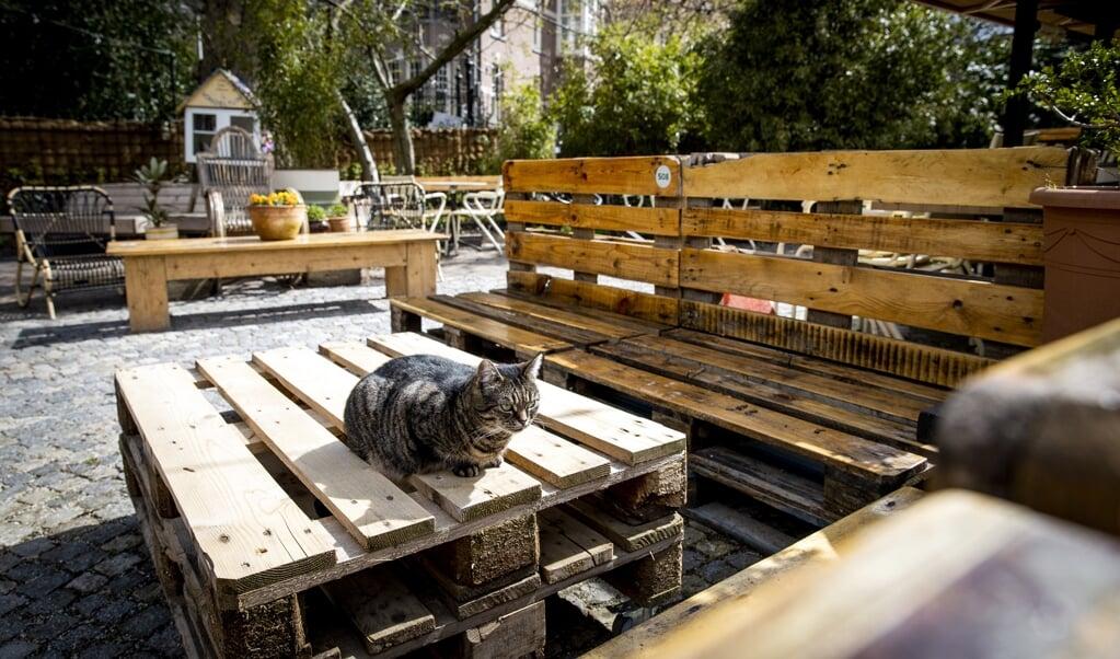 Een horeca-ondernemer heeft in het Amsterdamse Vondelpark het terras klaar staan, mocht het kabinet besluiten tot versoepeling van de coronamaatregelen.  (beeld anp / Sem van der Wal)