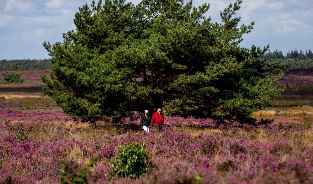 'Als heide en bos eenzijdiger worden, en plantensoorten wegkwijnen, betekent dat ook dat insecten die hiervan afhankelijk zijn, verdwijnen.'   (beeld anp / Sem van der Wal)