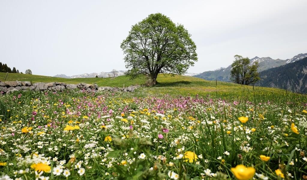 Onderzoekers keken naar 280 publicaties uit de laatste 45 jaar waarin planten uit de zuidwestelijke Alpenregio zijn onderzocht.  (beeld unsplash / Lukas Gächter)