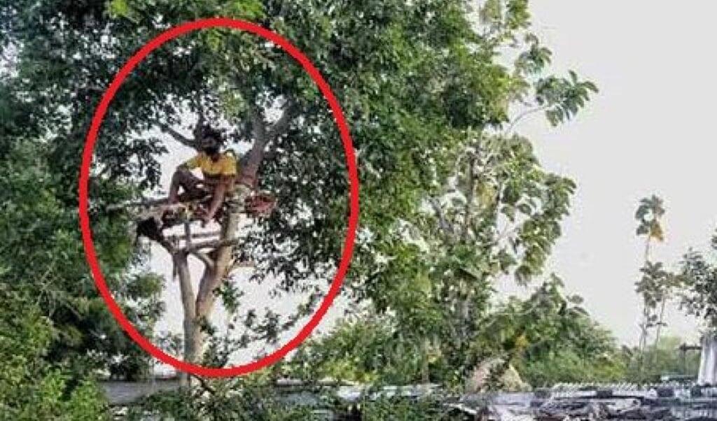 Siva heeft een boom als quarantaineplek.  (beeld nd)