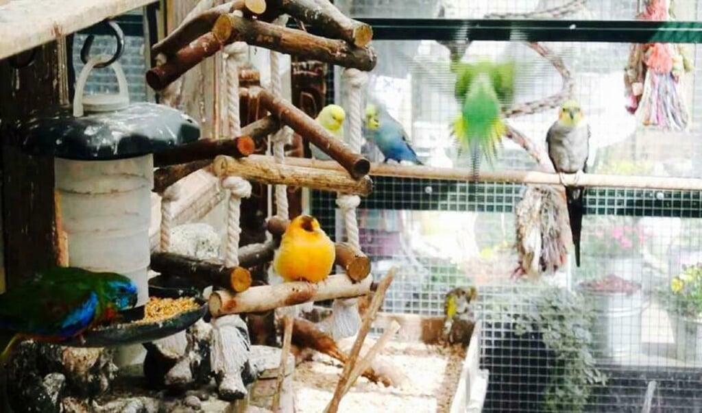 Mike vangt met zijn vader zo'n 20 tot 30 vogels op.   (beeld Luxurious Birds Home)