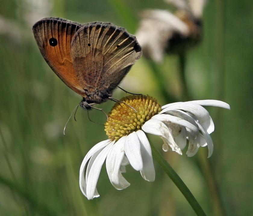 Minder bloemen in Nederland