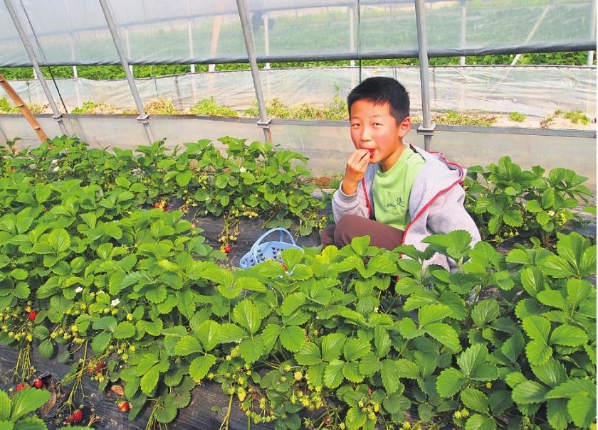 Chinezen eten steeds vaker biologisch