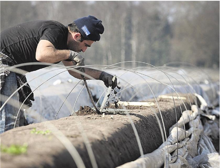 Nederlandse vleessector blij met Duitse minimumloon
