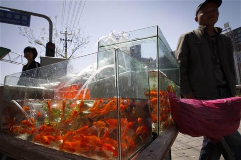 Kritiek op gevreesde stadswachten in China