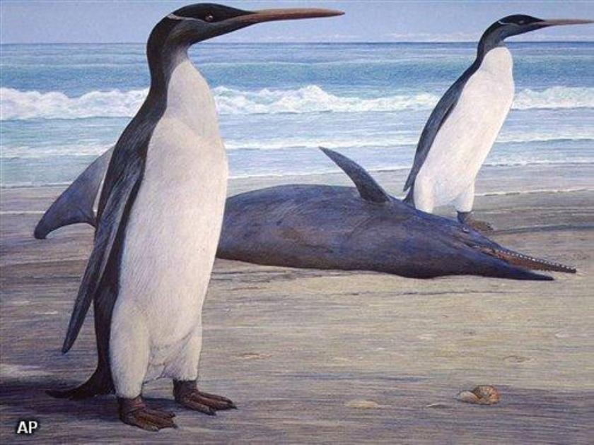 Uitgestorven pinguïn gereconstrueerd