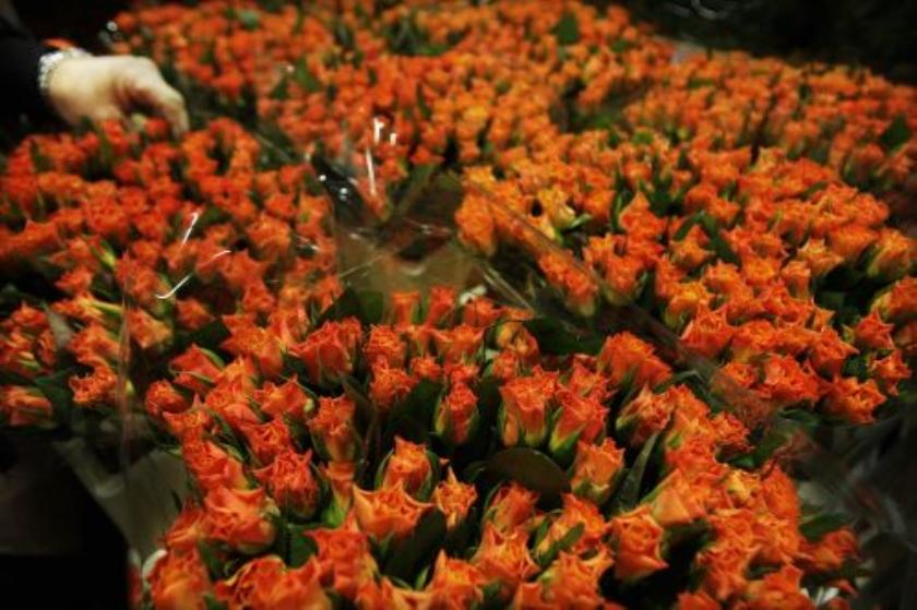 Oranje bloemetje in trek voor Koninginnedag