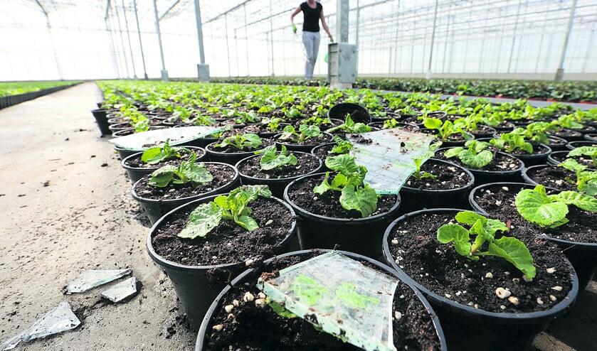 Meer schade door klimaatverandering  (vidiphoto)