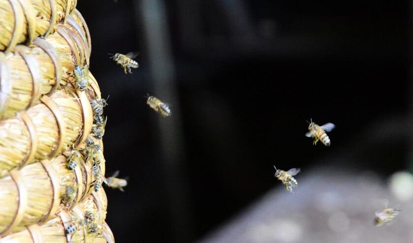Honingbijen hebben een actieradius van ongeveer drie kilometer.  (Theo Haerkens)