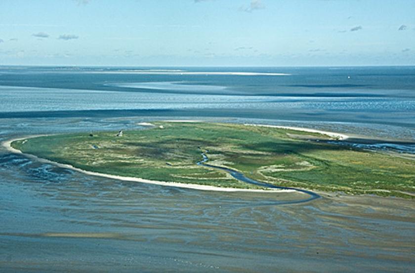 Natuurmonumenten gaat vogelparadijs eiland Griend komend najaar beschermen.  (endemica)