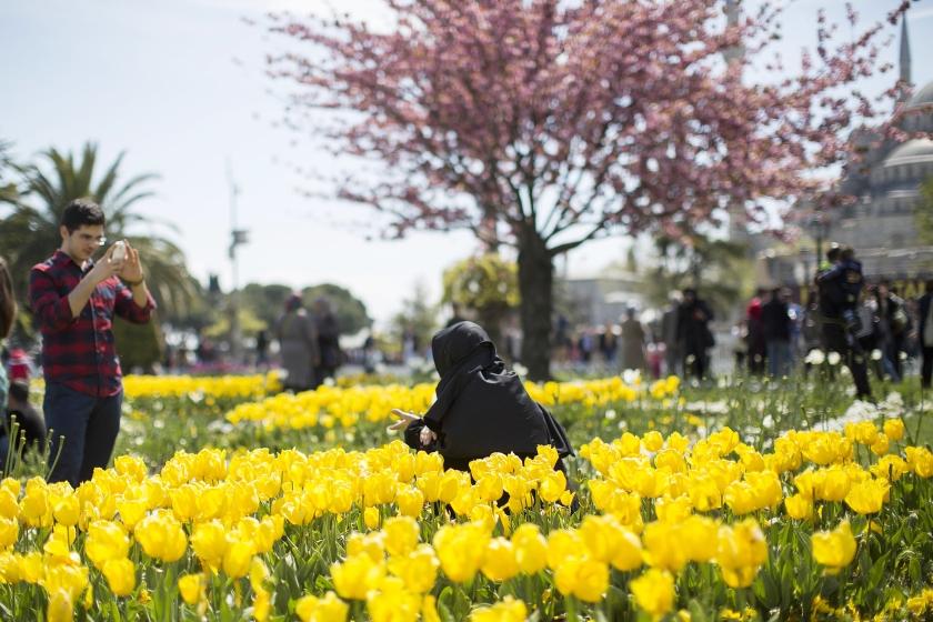 Tulpen in Istanbul. De tulp kwam in de zestiende eeuw vanuit het Ottomaanse Rijk (voorloper van het huidige Turkije) naar Nederland.  (ap / Gero Breloer)
