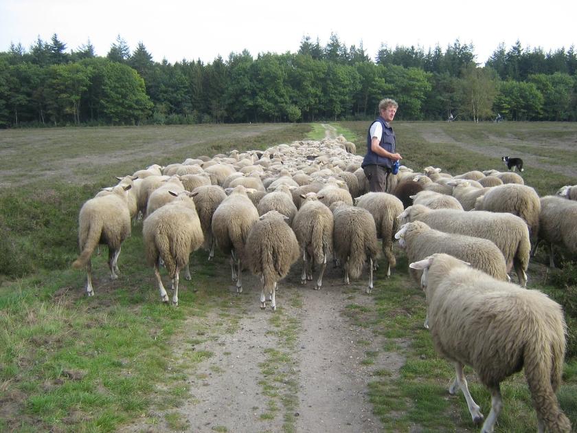 Hoe gaat de kerk om met schaapjes van buiten de kudde?  (nd)