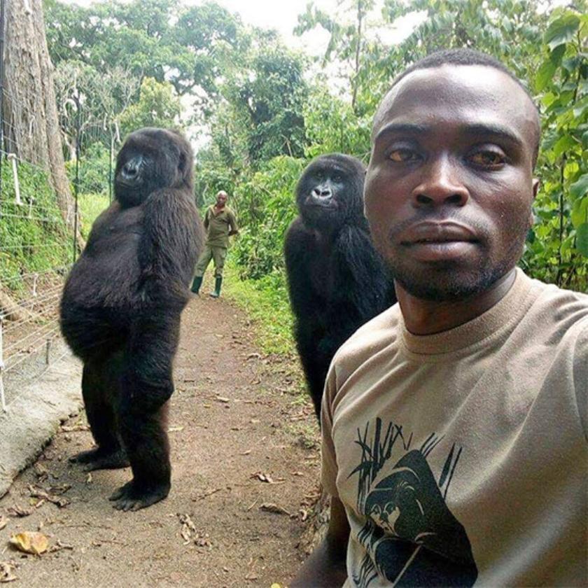 Ndazaki en Ndeze fotobommen Shamavu's selfie.   (virunga national park / Mathieu Shamavu)